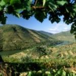 Accord entre les deux régions Douro et Pico