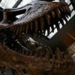 Une espèce de dinosaure découverte au Portugal