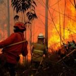 Les nombreux incendies cet été au Portugal ont mobilisé plus de 80000 pompiers
