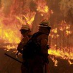 Un gigantesque incendie de forêt fait 62 morts et 59 blessés au Portugal