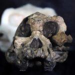 Découverte d'un crâne humain vieux de 3,8 millions d'années